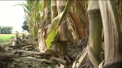 Corn, soybean crop expected to hit record high