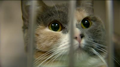 Janesville City Council considers cuts to stray cat program