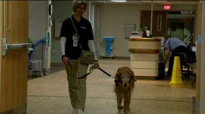 Medical staff vouches for therapy dogs