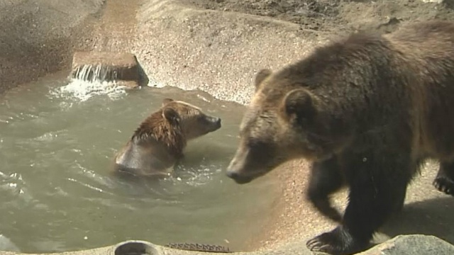 Henry Vilas Zoo announces 2 new residents coming to zoo