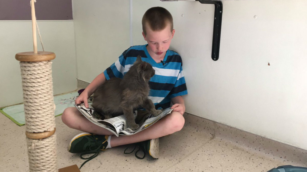 Unique program encourages literacy by reading to cats
