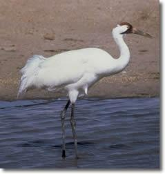 6 more whooping cranes now headed to Florida