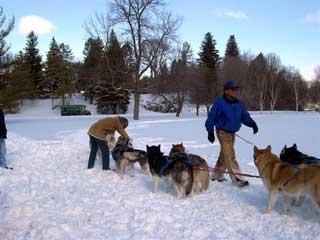 Dog sled racers wishing for snow