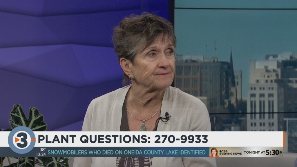 Linda answers viewers' plant questions