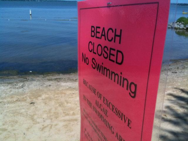 Beach on Lake Waubesa closed because of blue-green algae
