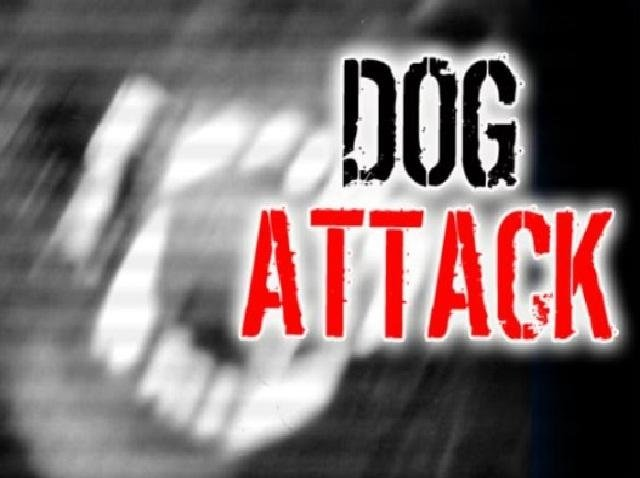 Pit bull leaps off balcony, attacks dog