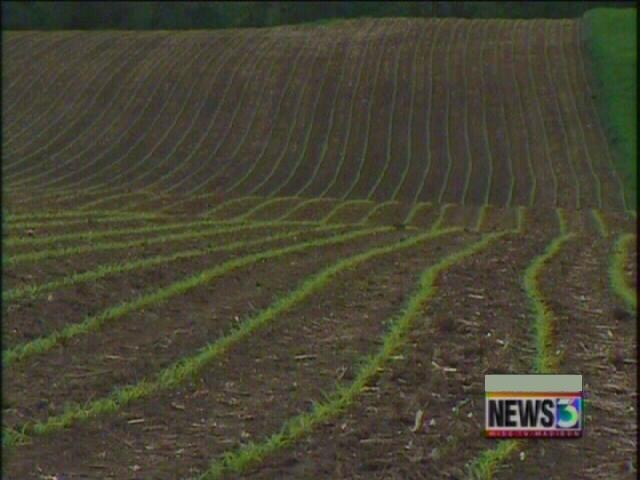 Farmers' crops struggling with lack of rain