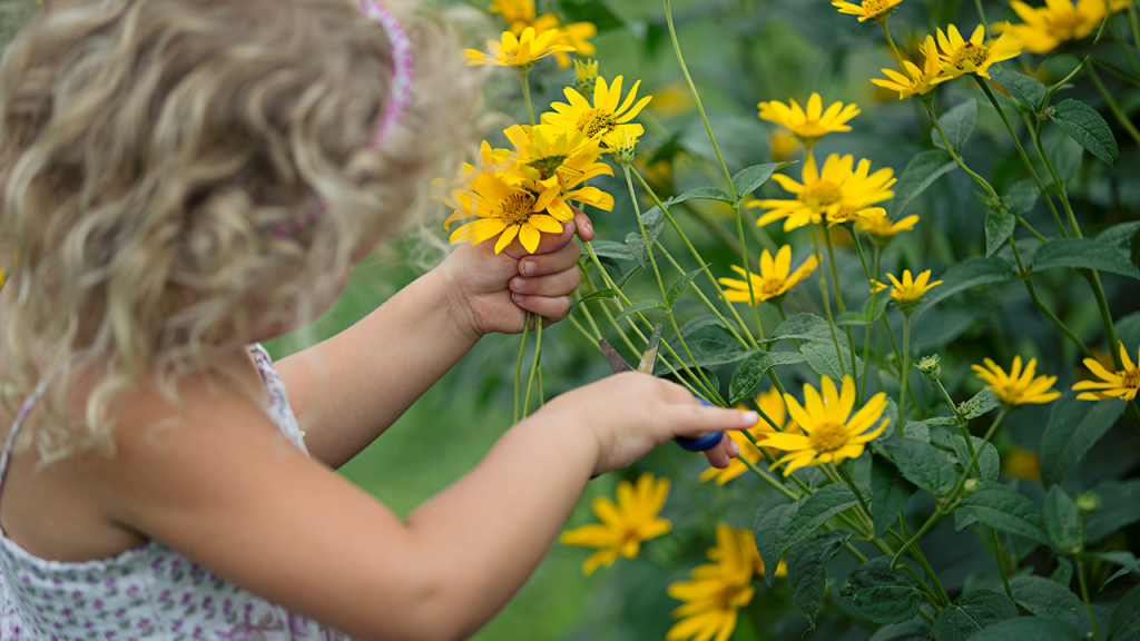 A young girl examines daisies.