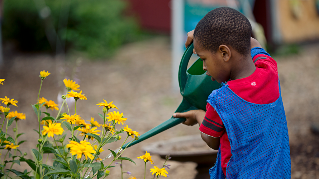 A young boy waters daisies at the Troy Kids' Garden.