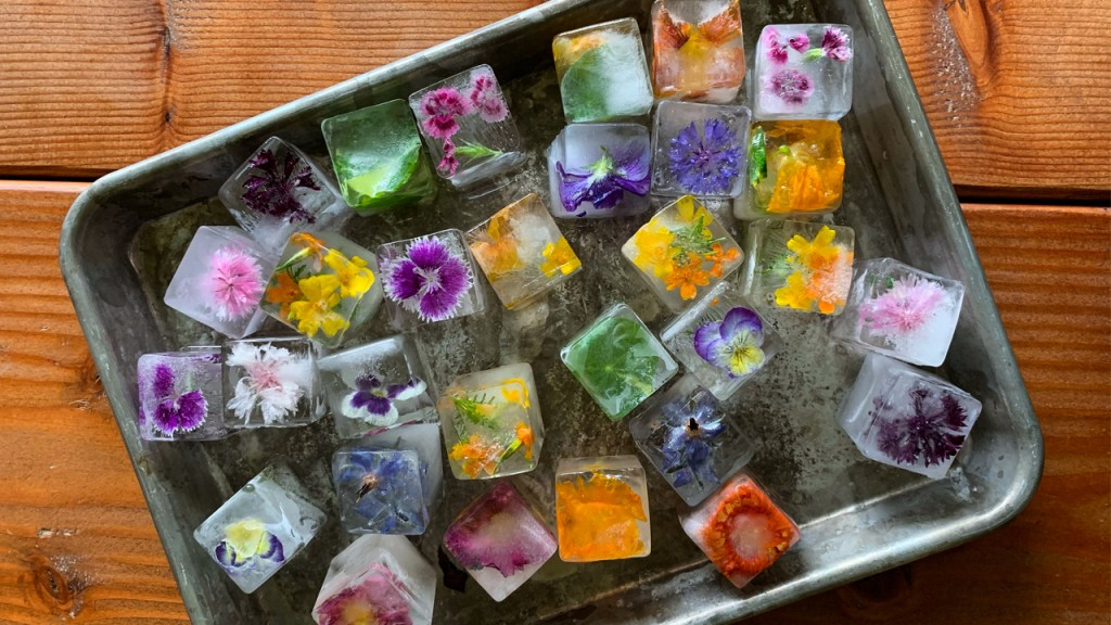 Square ice cubes with multicolored edible flowers frozen into them on a sheet pan