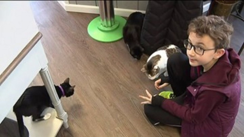 Boy Donates To Cat Cafe