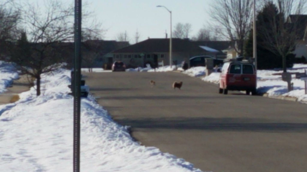 dogs involved in janesville bite
