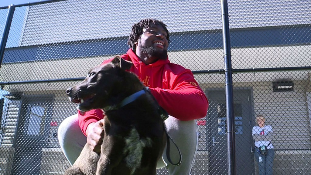 Chiefs' player sponsors 109 dog adoptions after Super Bowl win