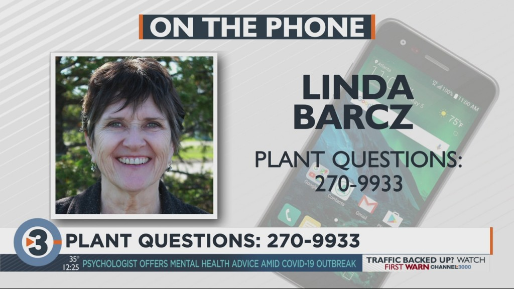 Linda Barcz Of The Bruce Company Answers Your Plant Questions