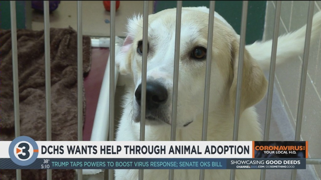 Dchs Wants Help Through Animal Adoption