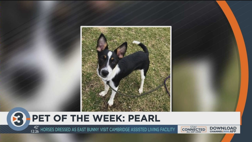 Meet The Pet Of The Week: Pearl