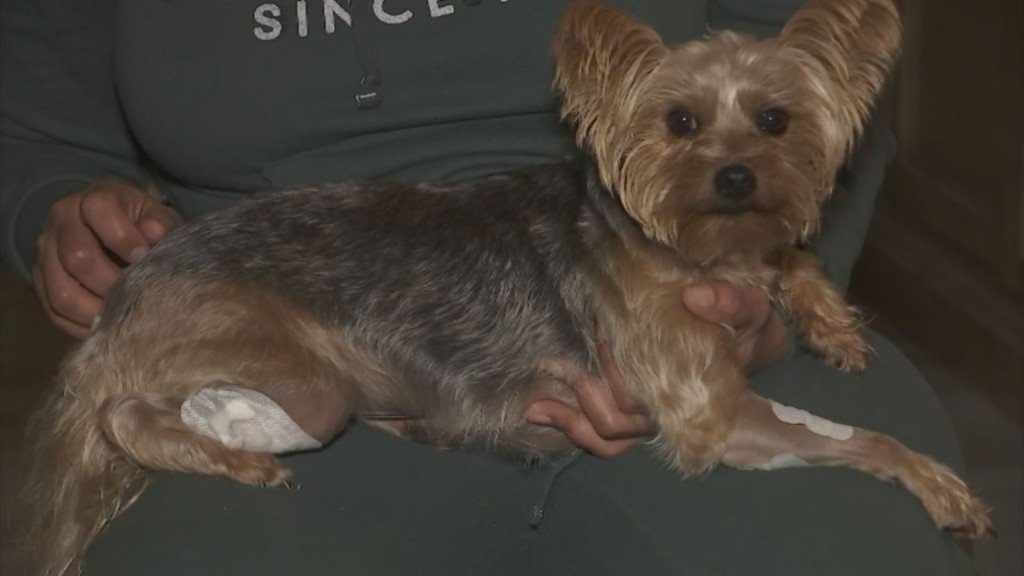 Dog Shot During Home Invasion