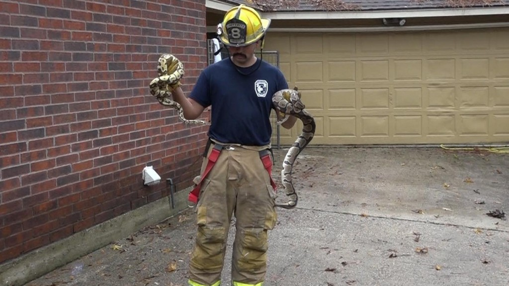 Firefighters rescue more than 100 snakes from burning house
