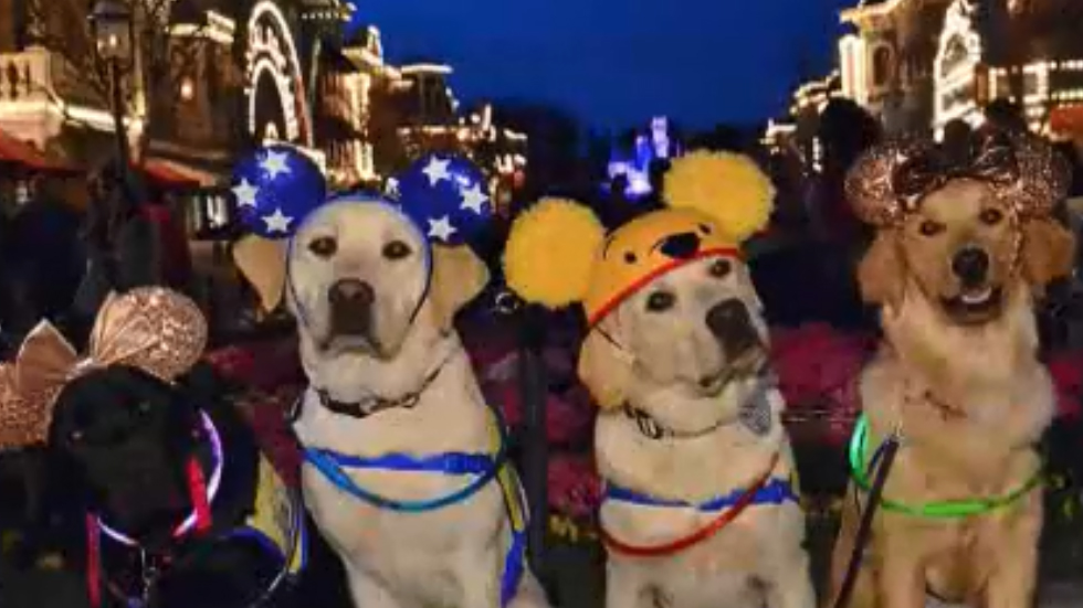 Service dogs train at Disneyland