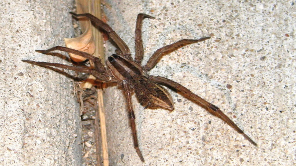 Man tries to kill spider, lights apartment on fire