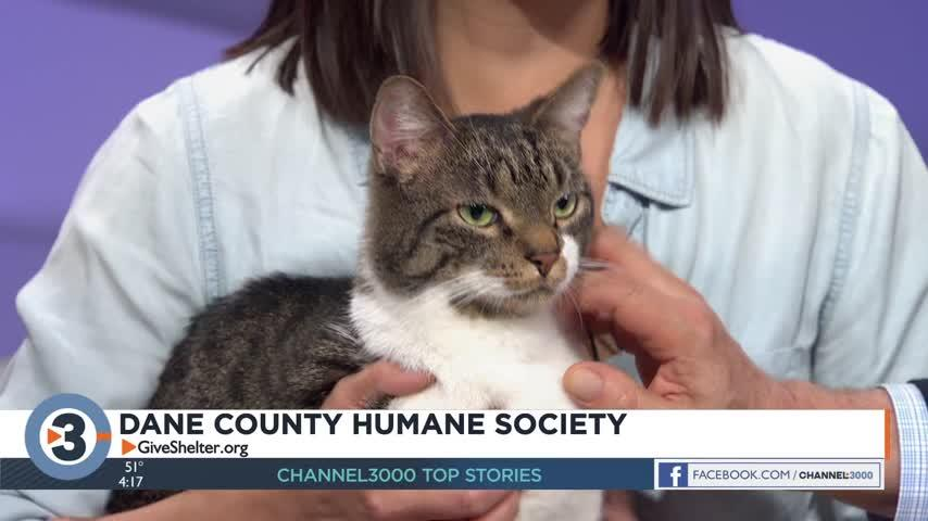 Meet the Pet of the Week: Boo Berry