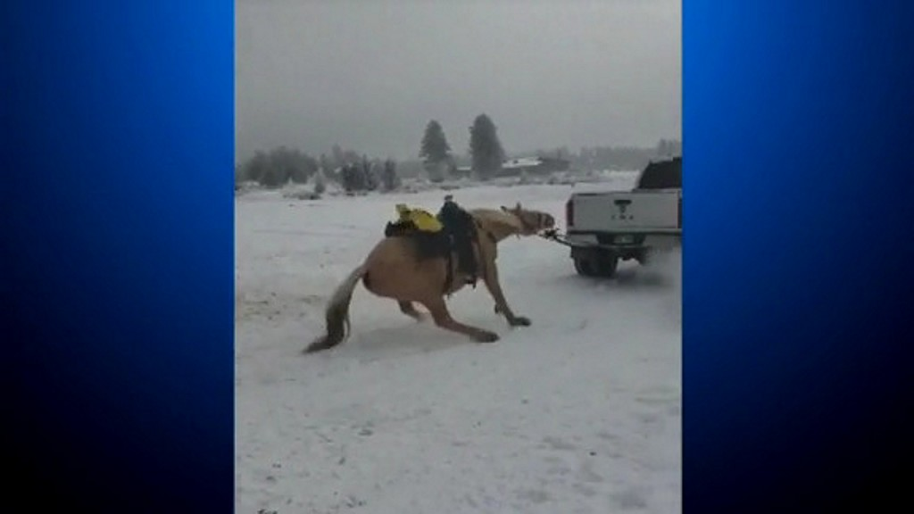 Couple charged for dragging horse behind truck
