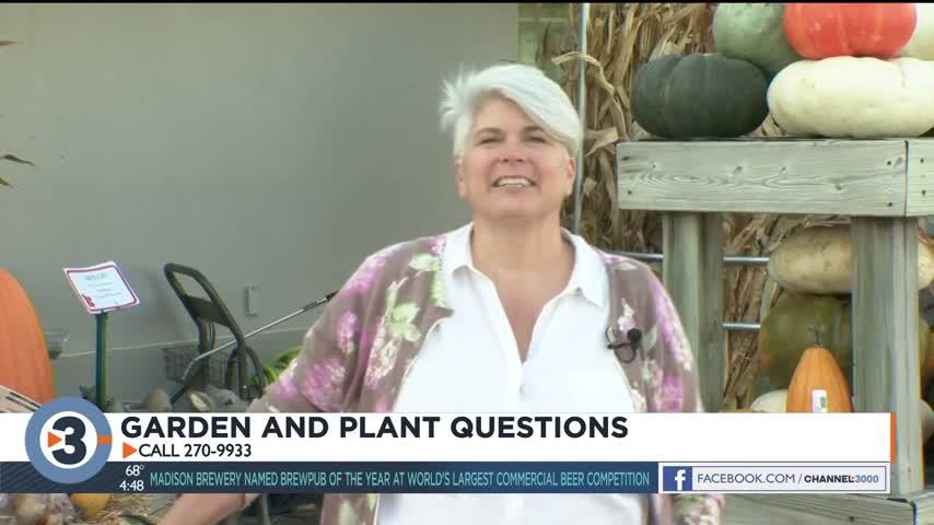 Lisa answers viewers' plant questions