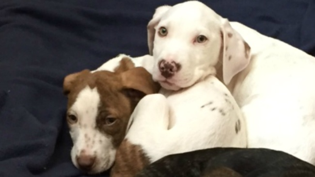 64 puppies look for homes after coming to Wisconsin