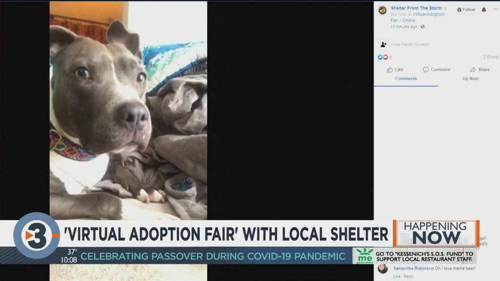 Virtual Adoption Fair With Local Shelter