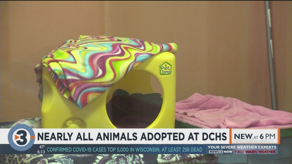 Nearly All Animals Adopted At Dchs