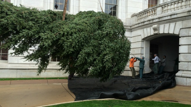 PHOTOS: 40-foot Christmas tree delivered to downtown Madison