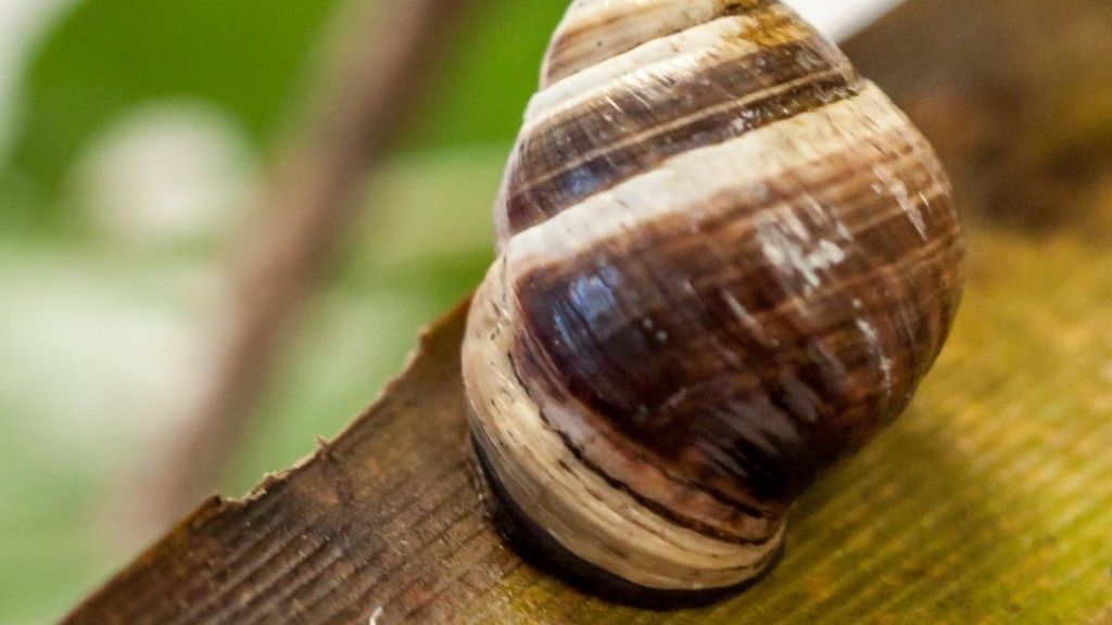 Lonely George, last Hawaiian tree snail, dies