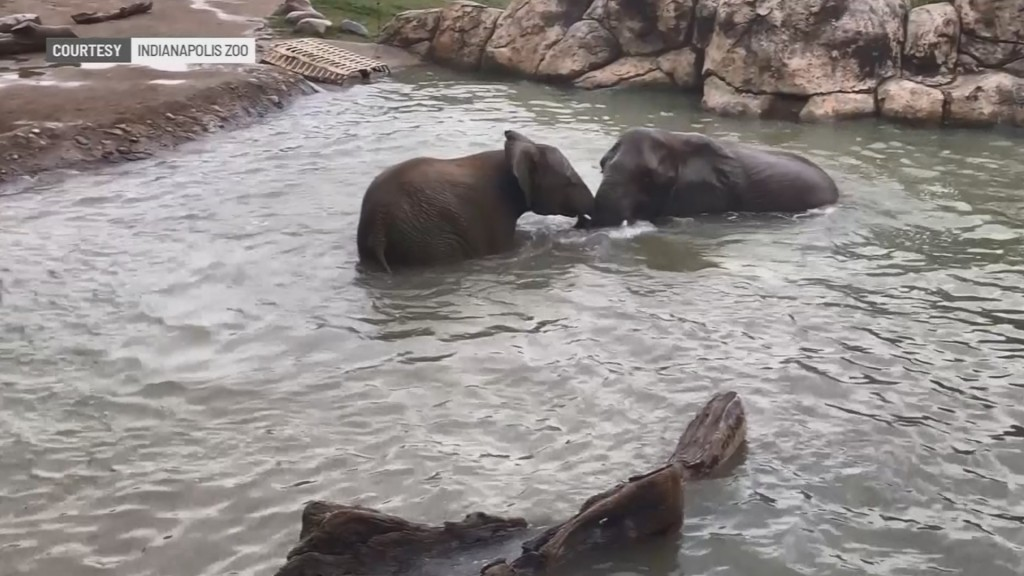 2 young female African elephants die week apart at Indianapolis Zoo
