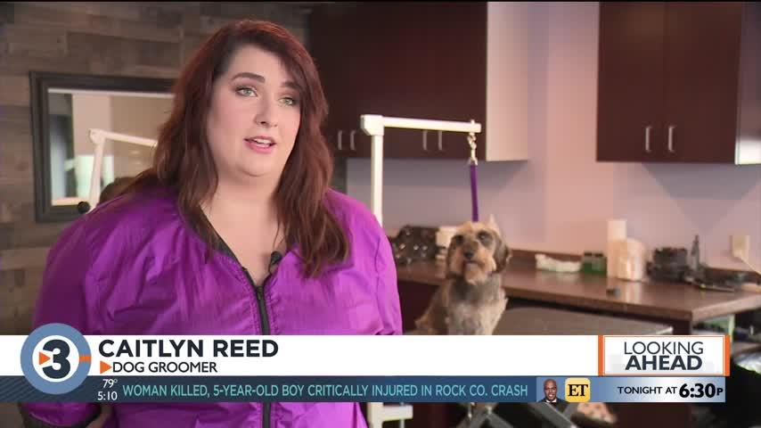Madison pet groomer qualifies as one of six finalists