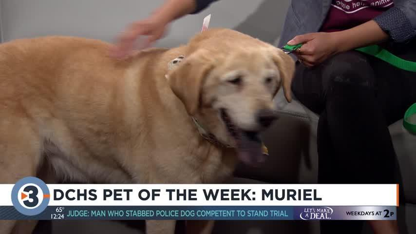 Meet the Pet of the Week: Muriel