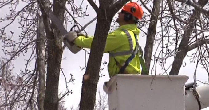 Beloit tackles emerald ash borer