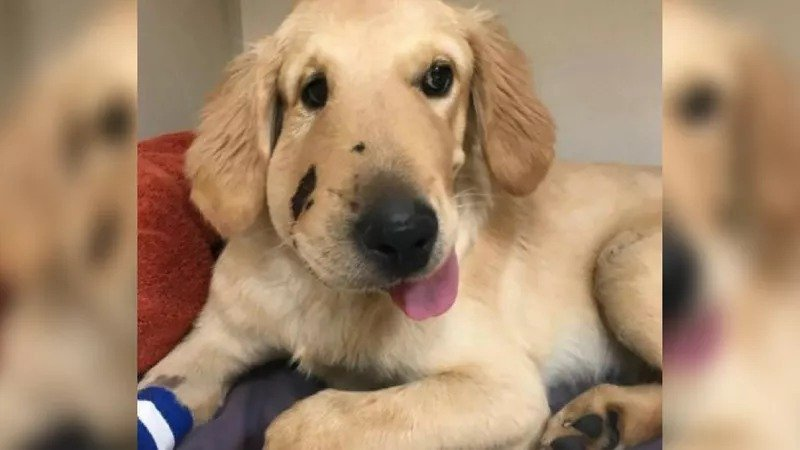 Hero puppy saves owner from rattlesnake