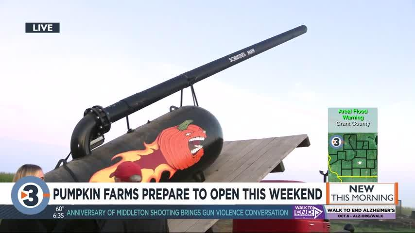 Pumpkin farms prepare to open this weekend (plus see the pumpkin canon in action!)