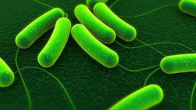E. coli infections across 19 states linked to romaine lettuce