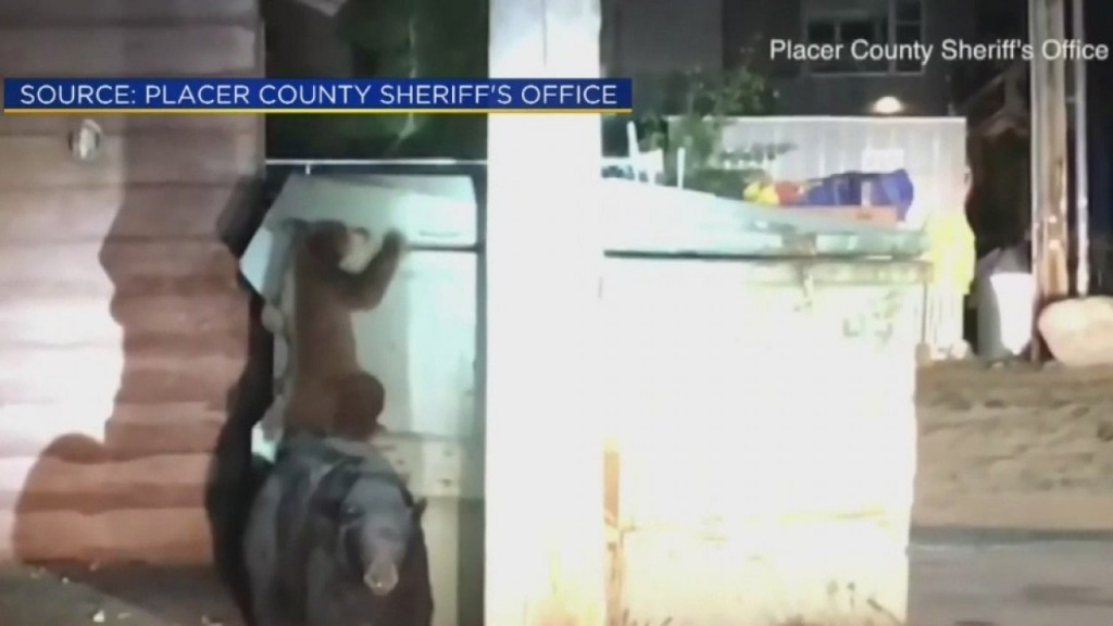 Deputies rescue cub from dumpster as mama bear watches