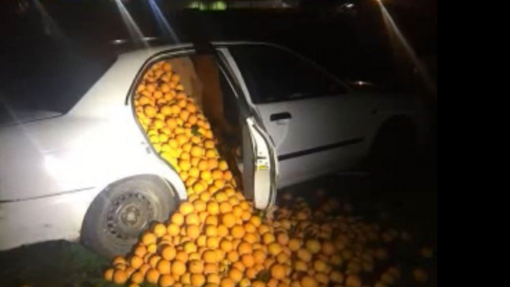 Police pull over car and oranges tumble out