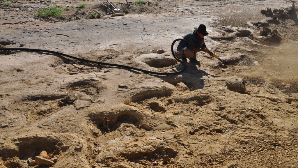 Giant dinosaur footprints saved from floods in Queensland