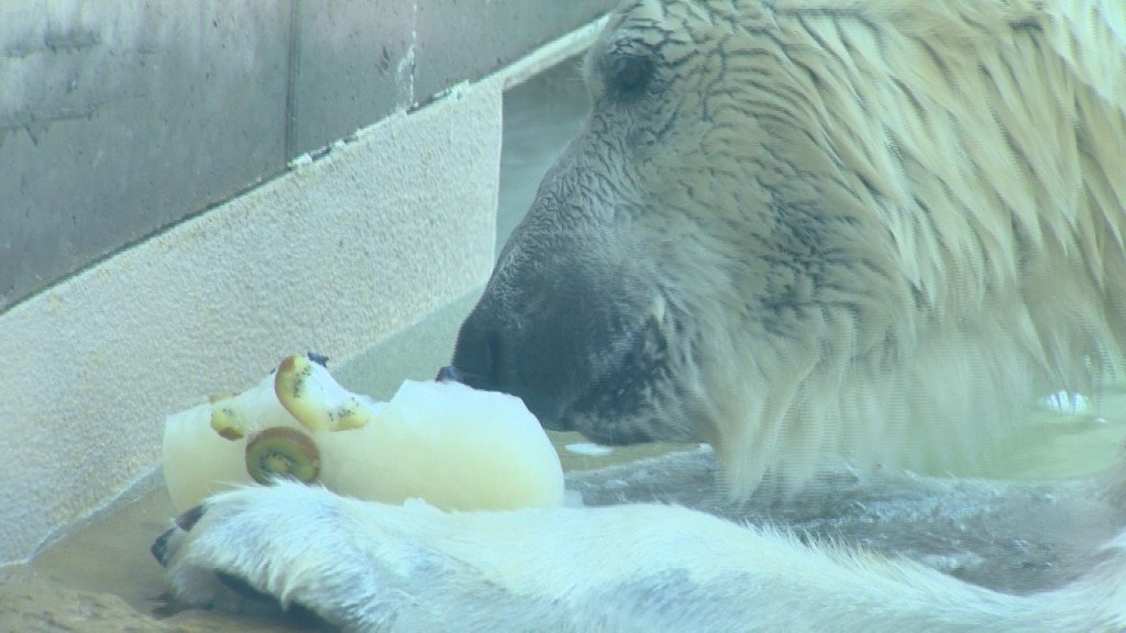 PHOTOS: Staying cool at Madison's zoo