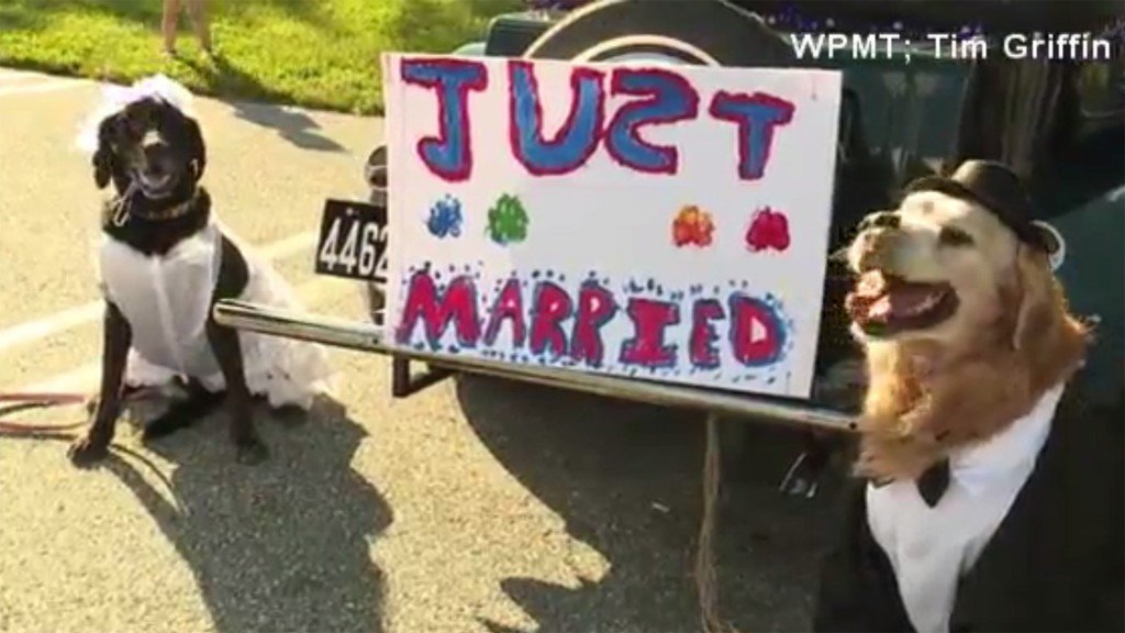 Dog with bucket list gets married