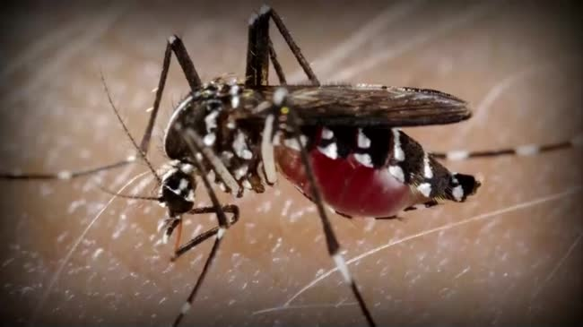 DHS: 1st case of Zika virus confirmed in Wisconsin resident