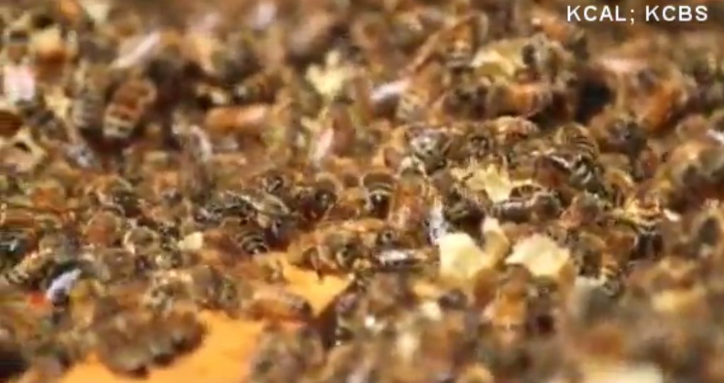 Bee, wasp venom shortage could be dangerous
