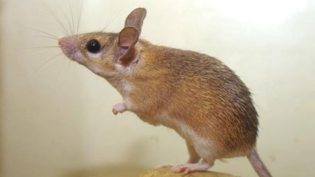 Scientists in China breed healthy mice from 2 females