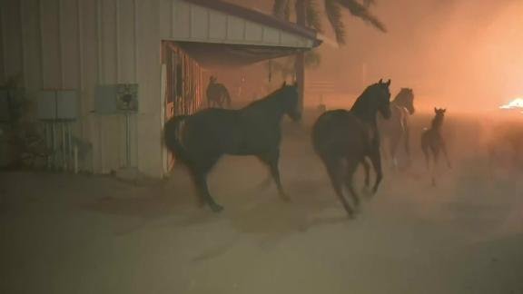 Forty horses were rescued from a burning ranch in California