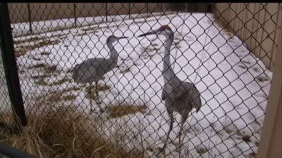 Outdoor lovers approve Wisconsin crane hunt idea