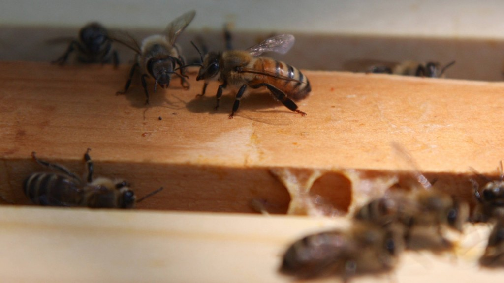 This winter saw most US honeybee colony losses since 2006